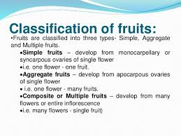 Fruits And Seeds For Class 11 Std