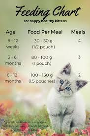 Baby Kitten Feeding Chart Feeding Your Kitten The Happy Cat Site
