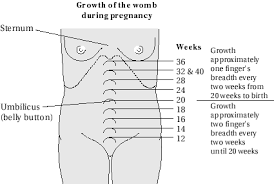 Fundus Chart Vito Blog Height Of The Fundus Charts