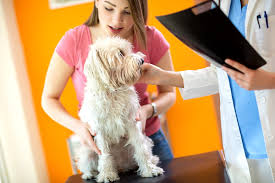 Salmonella Infection in Dogs - Symptoms, Causes, Diagnosis ...