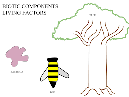 Components Of Ecosystem Flow Chart Biotic Component Wikipedia