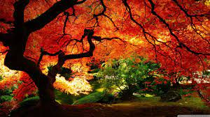 Japanese Autumn Desktop Wallpapers ...