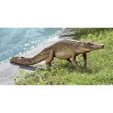 Lighted Alligator Lawn Ornament 4 Foot Long Grand Scale Walking Crocodile Wildlife Yard