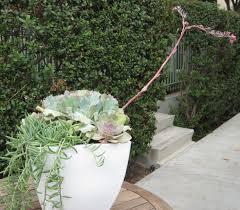 diy outdoor planter tough beauties