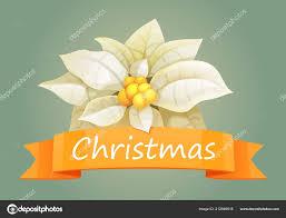 Poinsettie Weihnachtsstern Weißes Mit Orange Weihnachten