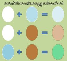 All About Egg Color Community Chickens
