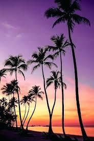 palm trees tumblr. Palm Tree Wallpaper S Leaves Tumblr Black And White Iphone . Border Trees