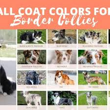 all border collie colors patterns
