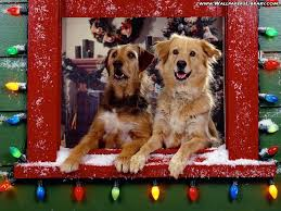 Christmas Dog Wallpapers - Top Free Christmas Dog Backgrounds - WallpaperAccess