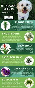 dog safe plants indoor plants hanging