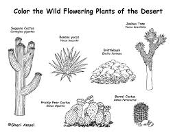 Small Picture American Desert Animals Coloring PagesDesertPrintable Coloring