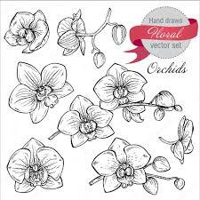 векторный набор ручной обращается орхидеи ветки с цветами