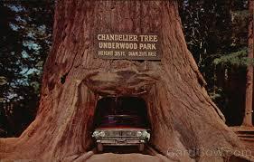 chandelier tree underwood park chandelier tree underwood park redwood highway california