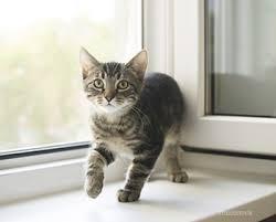 The New Kitten Checklist
