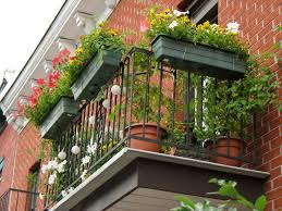 image of great apartment balcony vegetable garden