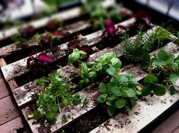 Small Picture Collection Vegetable Garden Ideas Pinterest Pictures Patiofurn