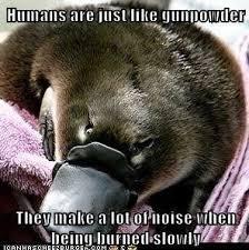 Sadistic+platypus+meme+beware+the+sadistic+platypus+is+watching+you_adacfc_3753813.jpg via Relatably.com