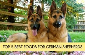 German Shepherd Puppy Food Chart Top 5 Best Dog Foods For German Shepherds