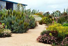 Small Picture water wise meditteranean gardens Water wise drought tolerant