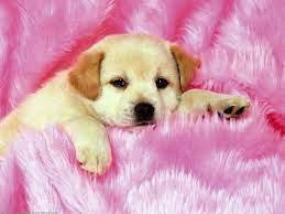 Pink Dog Wallpapers - Top Free Pink Dog ...