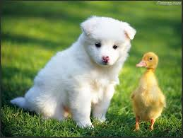 to enlarge cutest pets photography wallpapers