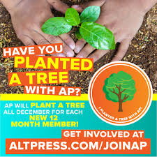 Plant a tree with AP: How you can help give back this December ...