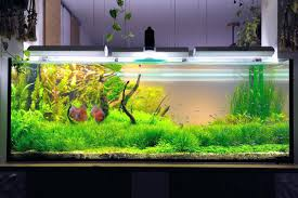 Fish Tank Aquascaping Appartment Tropical Fish Tank Aquascape Ideas