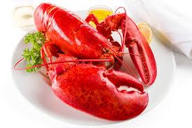 2 5 lb live maine lobster