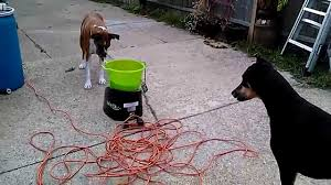 why i sold the dog ball launcher launching tennis go dog go