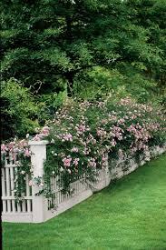 best garden plants. Contemporary Best Rose To Best Garden Plants S