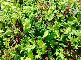 The Kitchen Gardener Microgreens With Mega Impact The Kitchen Gardener