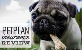 Petplan Insurance Reviews: Is It The Most Comprehensive?