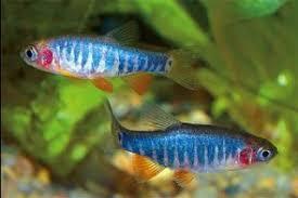 Реферат на тему рыбы аквариумные Аквариумные рыбки  реферат на тему рыбы аквариумные