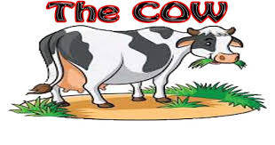 the cow essay in english hania naz grammar