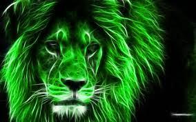 Lions photos, Lion wallpaper, Lion images
