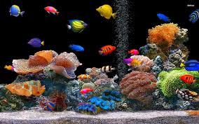 tropical aquarium wallpaper. Wonderful Aquarium Tropical Fish Wallpapers 20  1920 X 1200 With Aquarium Wallpaper Y
