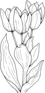 Tulips Flower Coloring Page Free Printable Coloring Pages