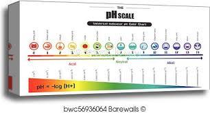 Universal Indicator Ph Color Chart Universal Indicator Chart Printable Www Bedowntowndaytona Com