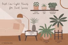 House Plants Low Light Requirements 15 Low Light Indoor Plants That Actually Crave Dark Corners