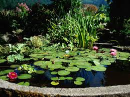 Pond Pond Care Cleaning Maintenance During Summer Saga