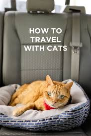 Traveling with Cats - How to Prep Them for Life On the Road