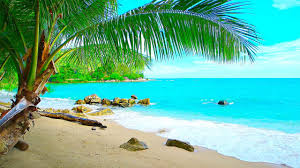 tropical island beach ambience sound ocean sounds and singing birds ambience for relaxation