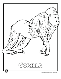 free coloring pages rainforest animals colouring fresh cute for animal print