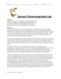 Chromatography Lab Spinach Chromatography Lab Salmon River High School Pages