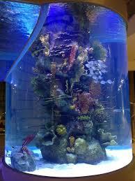 Fun Fish Tank Decorations Aquariums