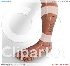 Clipart 3d Male Acupressure Acupuncture Foot Chart Royalty