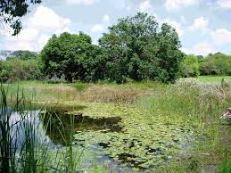 the botanic garden lake
