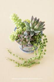Tips for Planting Succulents in Containers