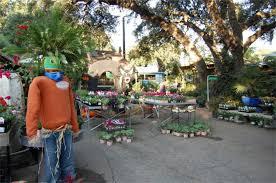 great outdoors garden center austin