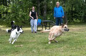 Bildresultat för hundrastgård